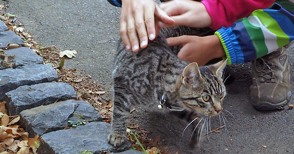 Süßes Kätzchen oder Parasiten-Transporter? Bild: Andreas Bubrowski/CJD Oberurff
