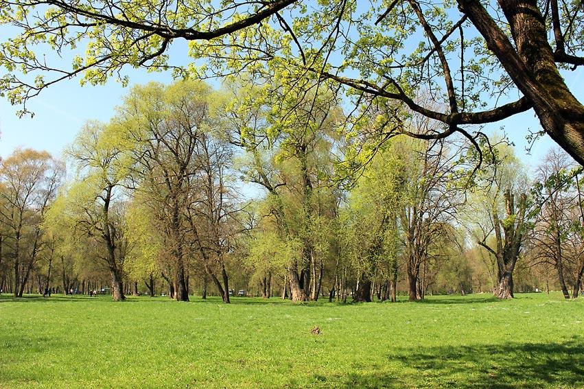 Englischer Garten: Weite Wege und Wiesen | Foto: Hanna Hieronymus/CJD Oberurff