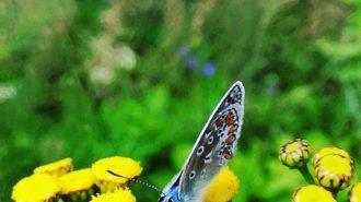 Landung des Schmetterlings   Foto: Dennis Ruhwedel/CJD Oberurff