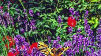 Zwei Schmetterlinge   Foto: Dennis Ruhwedel/CJD Oberurff