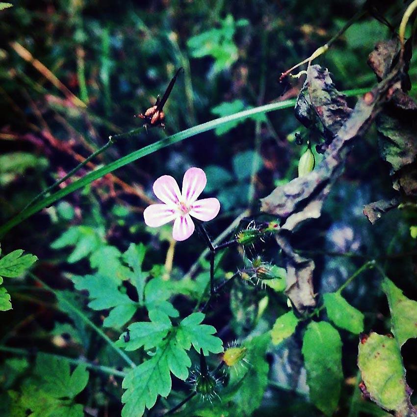 Lila unter Grün | Foto: Dennis Ruhwedel/CJD Oberurff