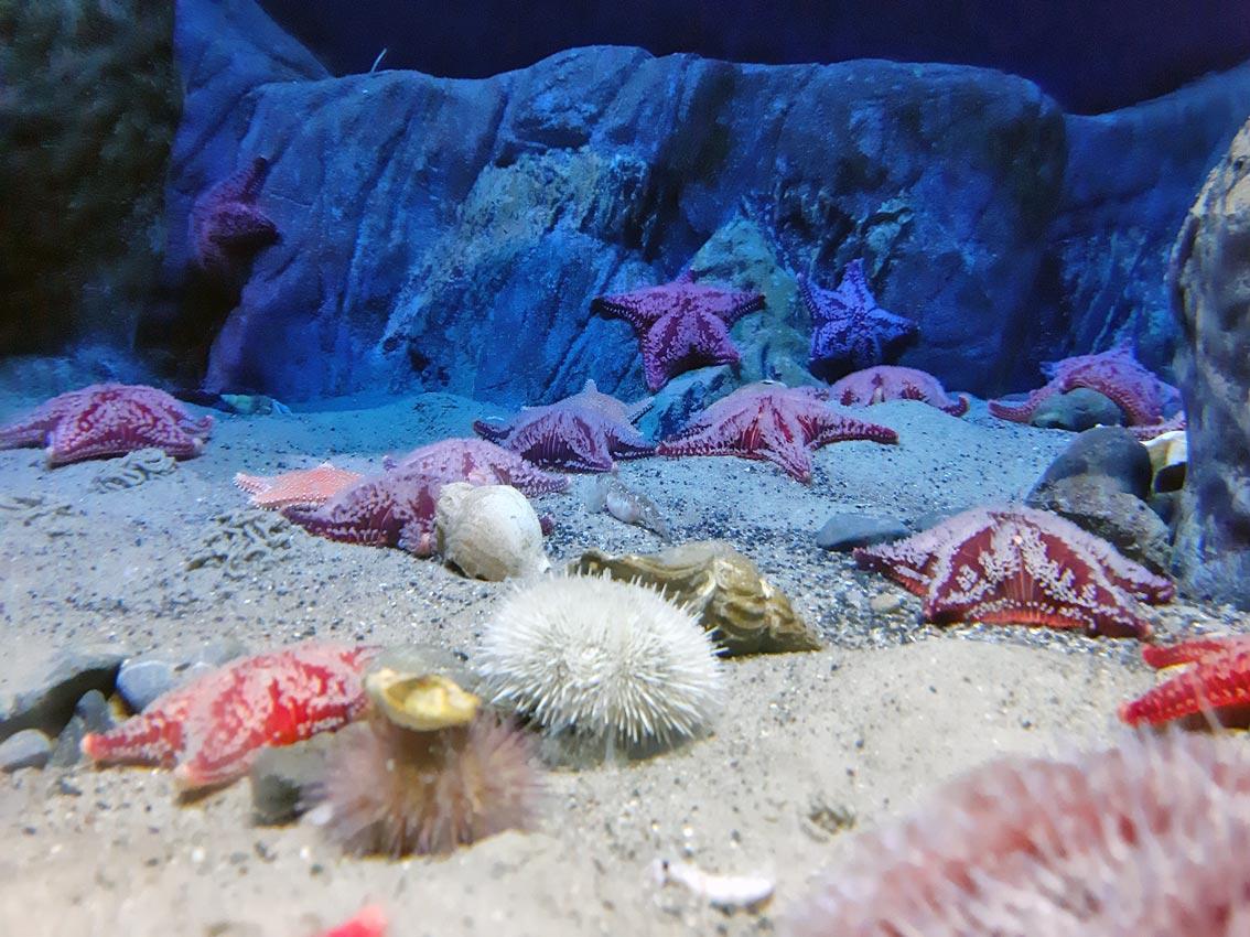 Im Ozeanum von Stralsund. Das ist eine Art Museum für Lebewesen im Meer. Foto: Carolina Schulz/CJD Oberurff