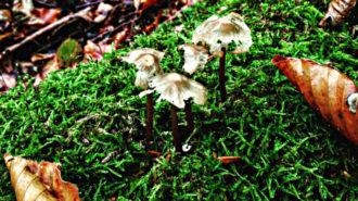 Pilze im Wald   Foto: Dennis Ruhwedel/CJD Oberurff