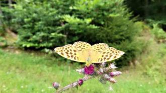 Schmetterling im Wald   Foto: Dennis Ruhwedel/CJD Oberurff