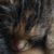 Profilbild von Jiri